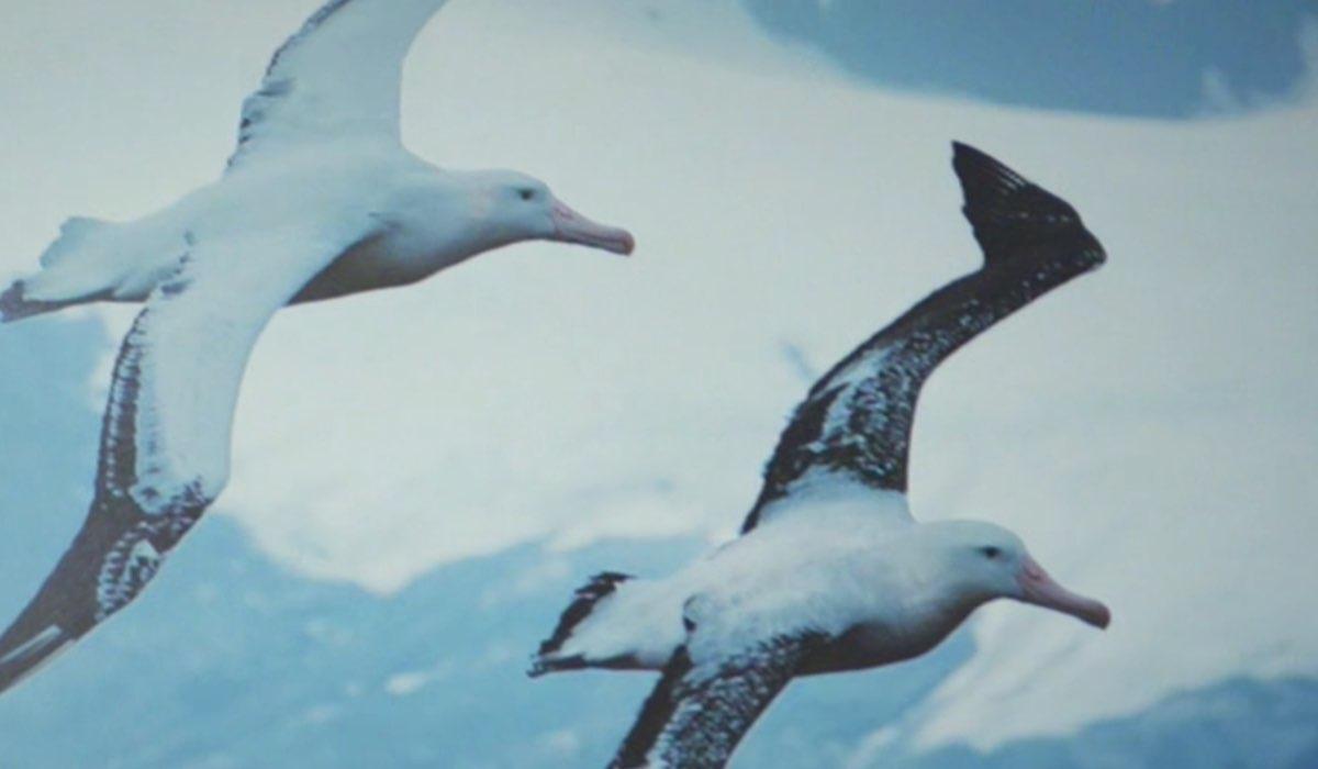 Daydreamer Le ali del sogno significato albatros, qui un fotogramma della seconda puntata Credits Mediaset
