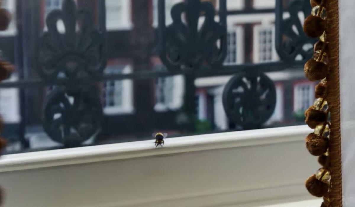 Le api in Bridgerton: un fotogramma dell'episodio 8. Credits: Netflix.